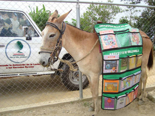 motherjones:  abudaii:  This is a mule disguised as a library. He brings books and literacy to children in remote Venezuelan villages. Mules like him are called Bibiliomulas and they are perfect.  Furiously Googling flights to Caracas.