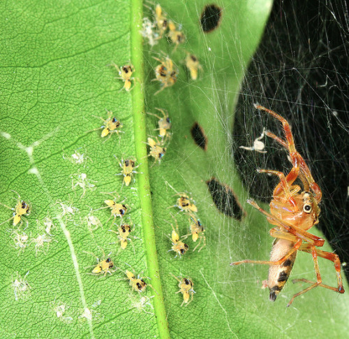 adorablespiders:  The mother keeping a watchful eye over her young ones