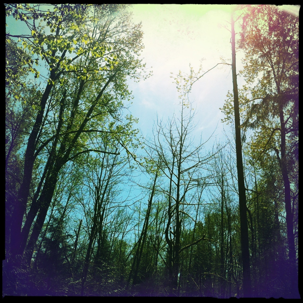 Beautiful Sunlight in the Green River Valley. Melodie Lens, Blanko Noir Film, No Flash, Taken with Hipstamatic #Hipstacode_MDBN © Kent Kangley 2012