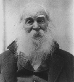 antsfactory:  'Not for a moment, beautiful aged Walt Whitman, have I failed to see your beard full of butterflies.' Federico García Lorca