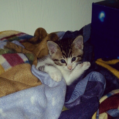 #Aww look at my #baby #kitty she's all tucked in her #blanky #cute #precious #soft #fluffy (Taken with instagram)