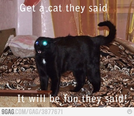 Cats….evil, lazy, annoying, creatures….yes must have in the house