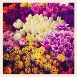 #flowers #pikeplace #seattle #tulips #colors #instagood #instaaddict #washington #spring #market #iphonesia #ignation  (Taken with Instagram at Pike Place Market)