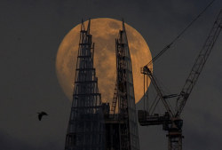 "guardianartanddesign:  Flick through the Shard's progress in pictures, then read Rowan Moore's article tracking the building's haphazard journeyfrom pipe dream to reality, and asks is it a good thing for the capital? Rowan Moore:  ""Save us from a poke in the eye with a sharp stick,"" I wrote in the London Evening Standard, in 2000, when property developer Irvine Sellar unveiled plans for a 1,400ft-high pointy cylinder above London Bridge station. I went on to say that if he wanted to build something this big, which would be visible all over London, the least Sellar could do was hire a decent architect."