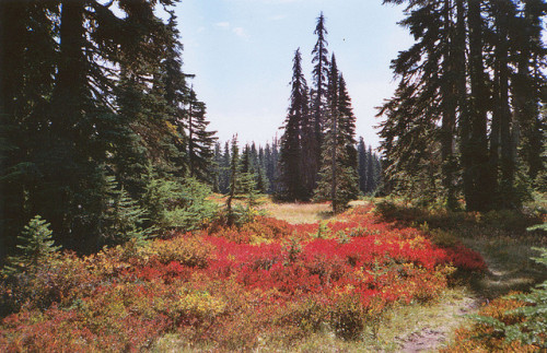 washingtonmyhome:  untitled, by Missy Prince.Indian Heaven Wilderness, Washington.
