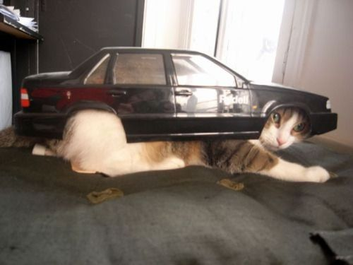 caturday:  Vrooom!  omg at first glance, I thought that was a giant cat.