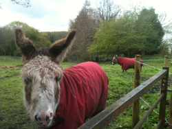 Spotted in Durham: friendly donkeys keen for attention