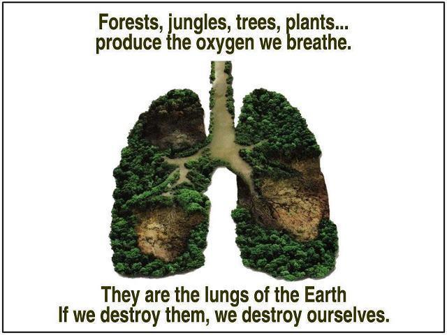 Technically, forests are the livers of the Earth since they purify and clean the air we breath and the water that we drink.  Oceans are more the lungs since they produce most of the oxygen we breath.