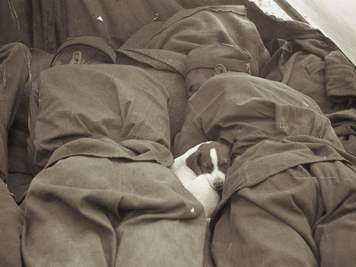 the-seed-of-europe:  Russian soldiers sleeping with puppy, Prague, Georgy Lipskerov 1945.