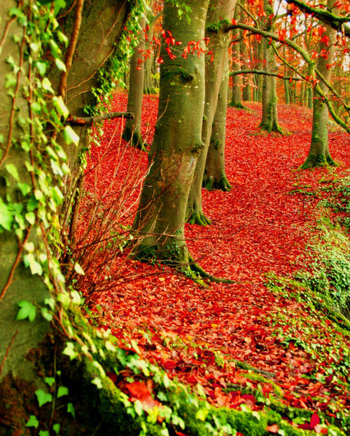 bluepueblo:  Red Forest, Dublin Ireland  photo via likeit