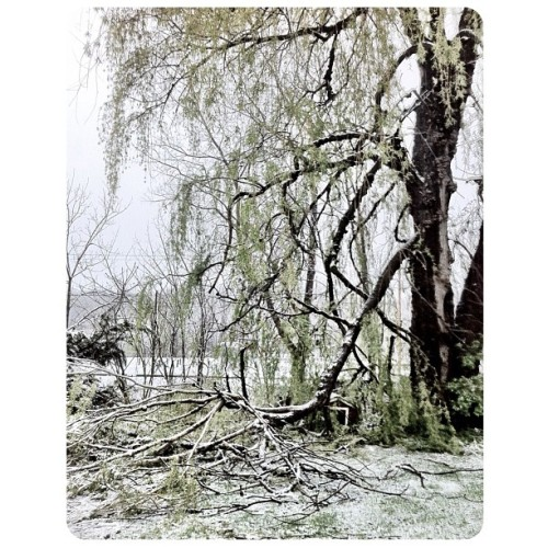 In our side yard, giant tree branches from a large weeping willow, that crashed down under the heavy spring snow during the night. We are incredibly fortunate that our electric is still on! #upstate #newyork (Taken with instagram)