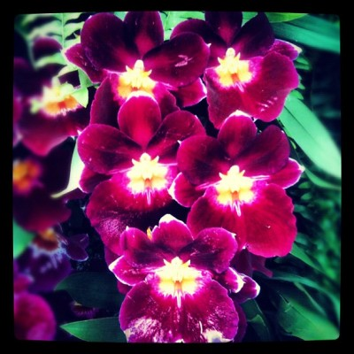 #botanicalgardens #orchidshow #nyc #flowers #gmy #igaddict #instasnap #igmaniac #photooftheday #instagram #instamood #instagood  (Taken with Instagram at The Orchid Show At New York Botanical Gardens)