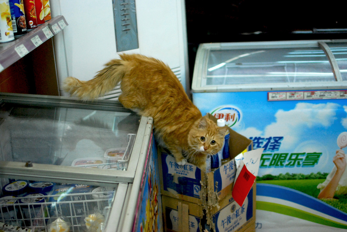 Cat goes for milk tea at the corner shop. Shanghai, China, 2012. Alex Muntean