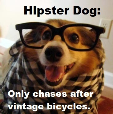 Suddenly Hipster Dog…