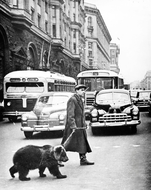 blackandwtf:  1963 Gregory Sukhov takes his pet bear Mickey for a walk in Moscow. (via vintagegal)