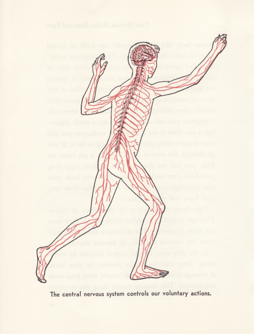 Voluntary Actions //Bernard Glemser All About the Human Body Illustrated by Felix Traugott