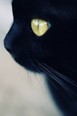 nadd-arts:  Lovely cat