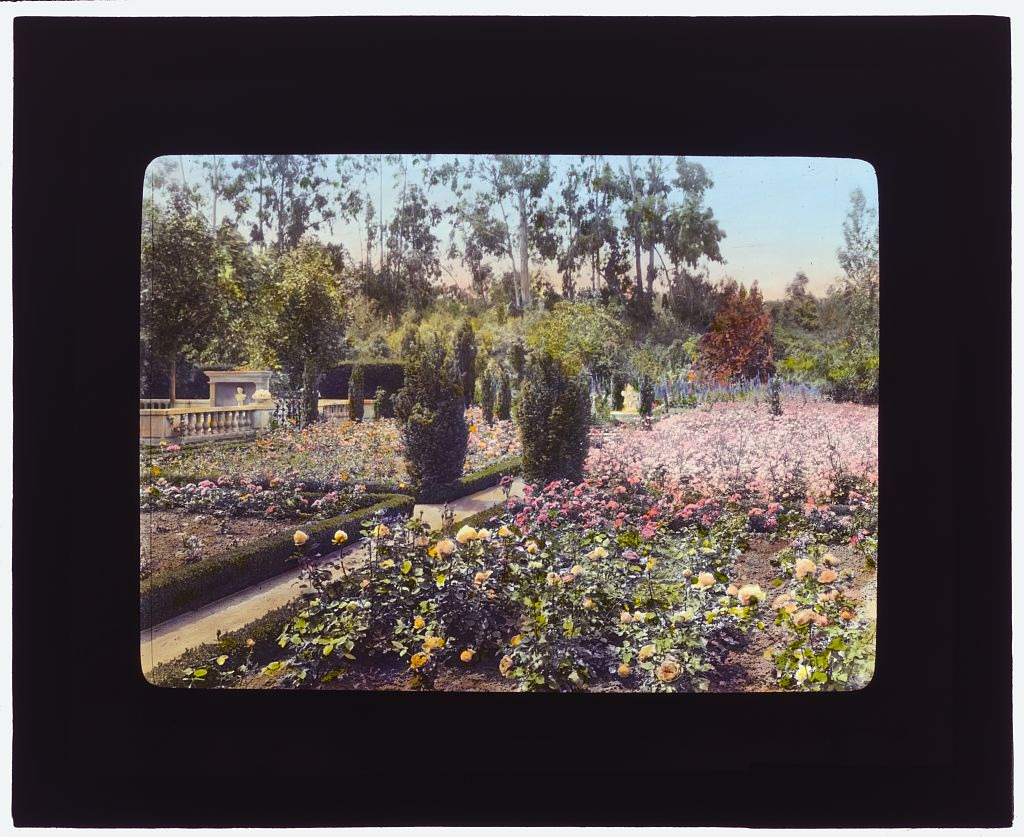 "Image description: This hand colored glass lantern slide is of the rose gardens at ""Newmar,"" Senator George Almer Newhall house, Hillsborough, California in spring 1917. A lantern slide is a small glass transparency, typically 3.25 x 4 inches, designed for use in a projector that casts an enlarged image on a wall or screen. This slide was created from a black-and-white photograph taken by noted American photographer Frances Benjamin Johnston (1864-1952). She was a dedicated advocate of the garden beautiful movement in the early 1900s and slides such as this were used to illustrate her popular lectures for garden club members, museum audiences, and horticultural societies from 1915 until the 1930s. View more garden slides on Flickr. Image from the Library of Congress."
