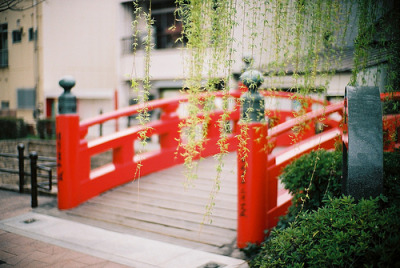 melodyandviolence:  Harimaya Bridge (by oceanus2007 (***busy***))