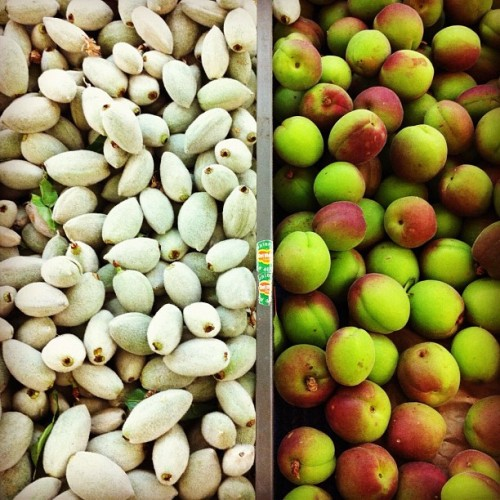 Fancy that! Not necessarily #vegetable but hey. #photoadayapril #freshalmonds #sourapricots  (Taken with instagram)