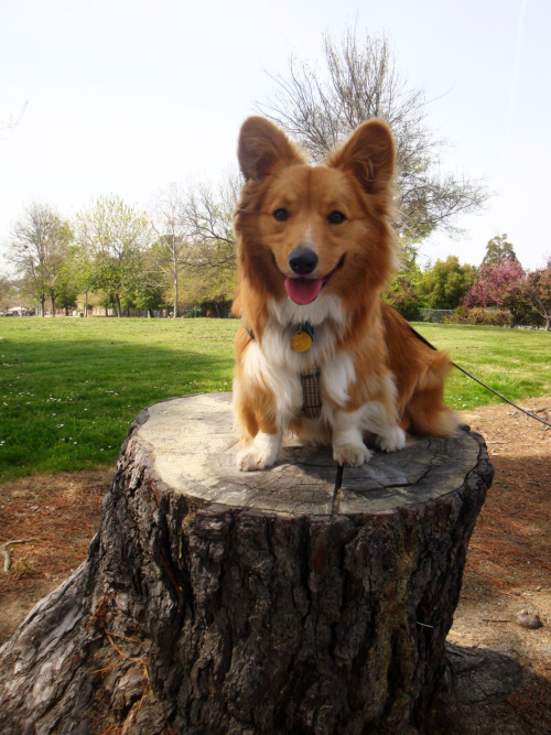 Henry poses atop a stump at the park.