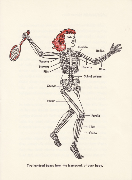 Two Hundred Bones //Bernard Glemser All About the Human Body Illustrated by Felix Traugott