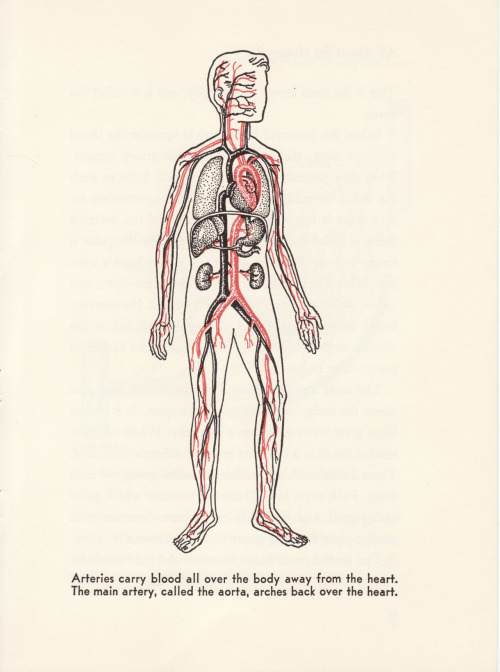 The Main Artery //Bernard Glemser All About the Human Body Illustrated by Felix Traugott