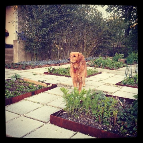 A Girl's best friend(s). Her dog & her plants. (Taken with Instagram at The Urban Ranch)