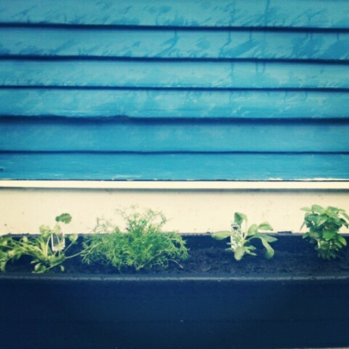 our little herb garden <3 (Taken with instagram)