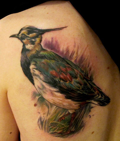 And another bird tattoo from a little while back… Click on the photo to see the whole Flickr set of bird tattoos I've done.
