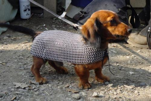 thefluffingtonpost:  PHOTO OP: Sir Dachshund of Weinerton Via Druzya-moi.ru.