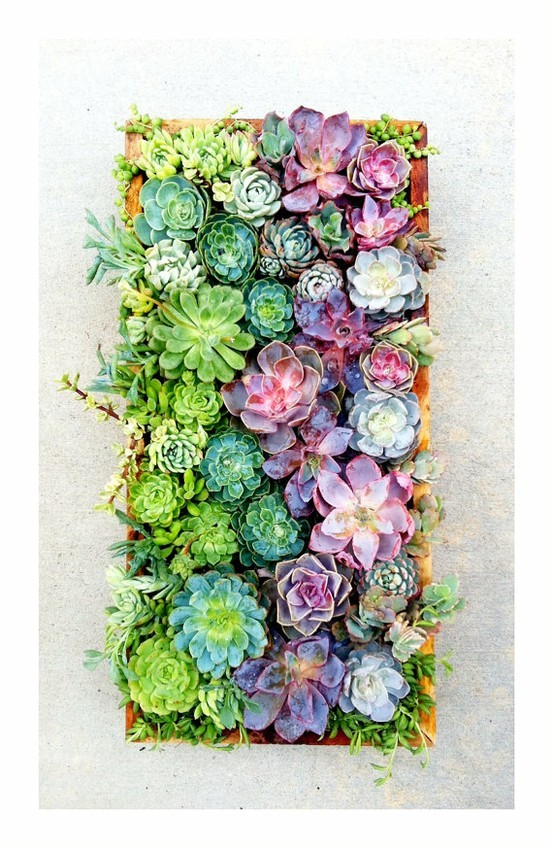 justcallmegrace:  succulents