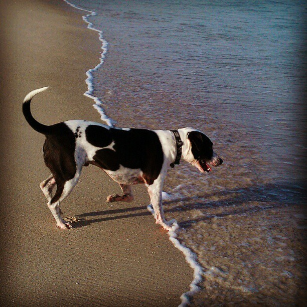 Hanging with the Dewmelon at the dog beach. (Taken with instagram)