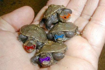 this is all I wanted. why do turtles have to be so awful to actually have? :(