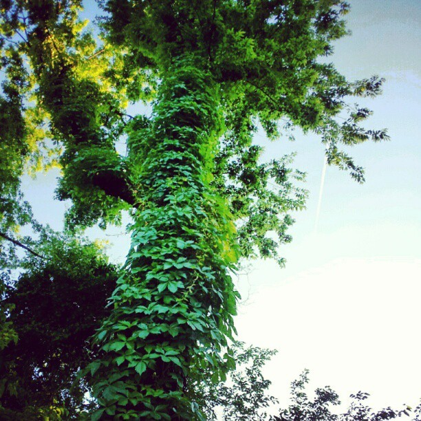 I tried snapping the plane in this tree shot. (Taken with instagram)