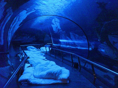 selenaishiding:  Sleepover @ the aquarium (: Definitely adding this to our bucketlist… Once I turn 18.