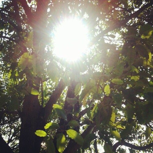 Hmmm :) #nature #sun #sore #afterclass  (Taken with instagram)