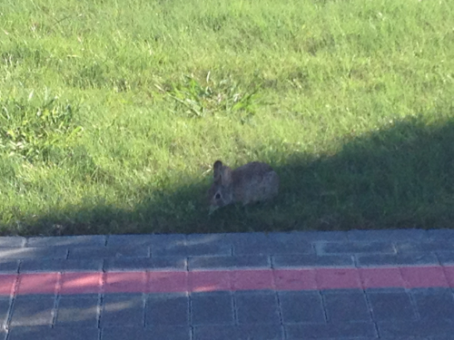Rabbits like 2 feet away and still not scared.