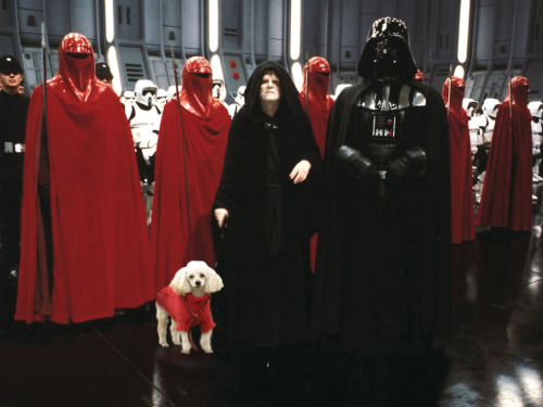 darthvaderwithpoodles:  He'd always wanted to join the Emperors Royal Guard.