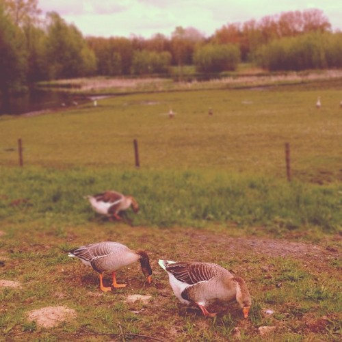 Duckface. (Taken with instagram)
