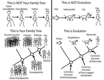 abaldwin360:  This is not evolution, this is.