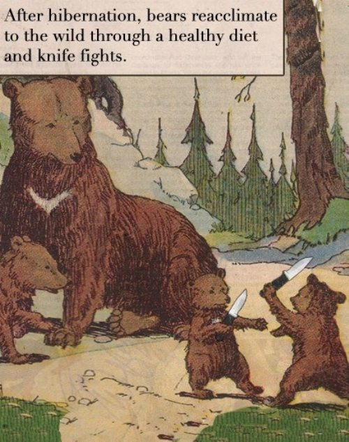 Bears with Knives