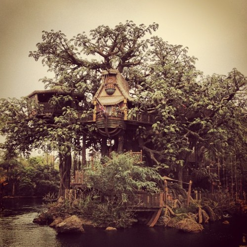 #disneyland #hongkong #adventureland #disney #photooftheday #places #igerspinoy #igersmanila #instashot #gf_swiss #bestoftheday #jj_forum #jj #instagramhub #igers #iphonesia #igdaily #instagood #instamood #webstigram #statigram #squareready #asia #boat #tree #treehouse #iphone #nature #picoftheday #tweegram (Taken with Instagram at Tarzan's Treehouse)