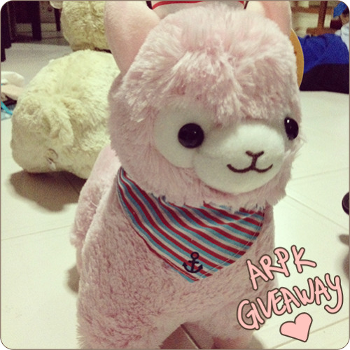 kyaptan:  ALPACA PLUSH GIVEAWAY!! HEY GUYS I'M BACK FROM TW HEHE and I bought one extra alpaca plush to give away to you guys! I know these are pretty hard to get outside of a few countries so I thought to do it!  ADVANCE WARNING That this is NOT an authentic ARPAKASSO plush toy, but a China(??) knockoff. He's still cute though! He's about 32cm tall and exactly as pictured. I WILL NEED YOU TO PAY FOR SHIPPING. I'm uh. Kinda broke. Since the winner is paying for shipping he will fly to anywhere in the world! ONE LIKE, ONE REBLOG, and ONE REPLY per person. Replies do count! No multiple accounts, no multiple reblogs, or you're instantly disqualified. This ends in a week, on May 1st. I will then raffle him off to a single winner!