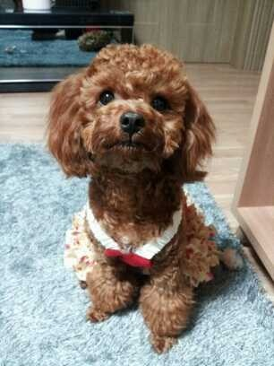 "ygfamilyy:  Minzy: ""Today is our Dougie's birthday!!!>_<# Today is my baby Dougie's Birth day.."""