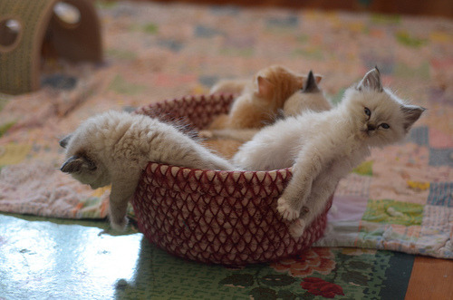 """We need a bigger basket!"" Photo by  ©The Itty Bitty Kitty Committee"