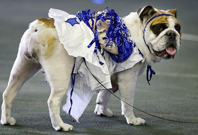 Matilda Rose participates in the 2012 Beautiful Bulldog Contest in Des Moines, Iowa. Despite her fancy dress, Matilda did not win the event. See more photos from the contest in the gallery below. (Charlie Neibergall/AP) GALLERY: 33rd Annual Beautiful Bulldog Contest