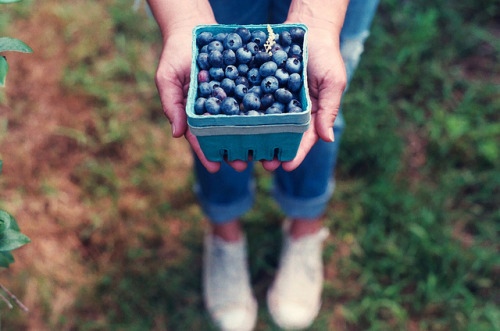 blueberry picking. by weepy hollow on Flickr.