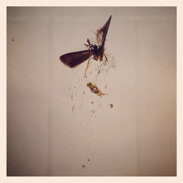 Anatomy of a [Dead] Moth (Taken with instagram)