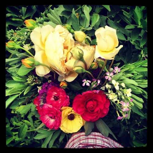 greenshorty:  #bouquetoftheday: David Austins, ranunculus, broccoli, b-fly bush and favas. (Taken with Instagram at Muir Ranch)